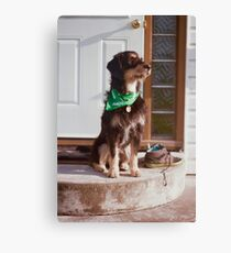 'Dexter on the steps' Canvas Print