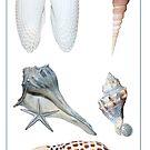 She Sells Seashells by Bonnie T.  Barry