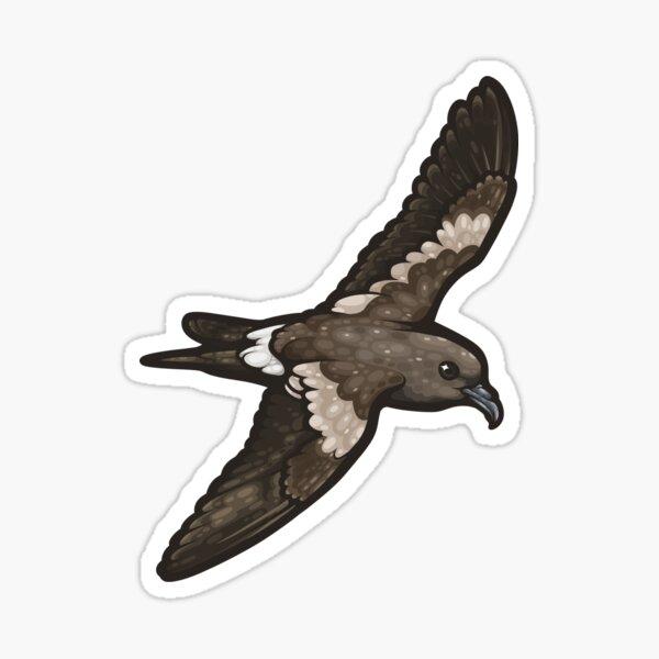 Leach's Storm Petrel Sticker
