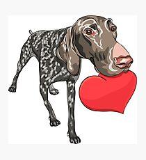 Kurzhaar with red heart Photographic Print
