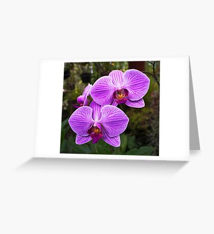 Beautiful Lady of the House Greeting Card