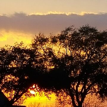 Vibrant South Austin Sunset by LisaQuenon