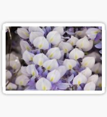 Wisteria Sticker