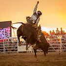 Bull Rider by Natalie Ord