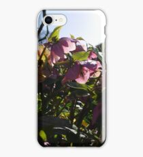 Spring Flowers at Rowntree Park iPhone Case/Skin