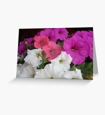 PETUNIAS! Greeting Card