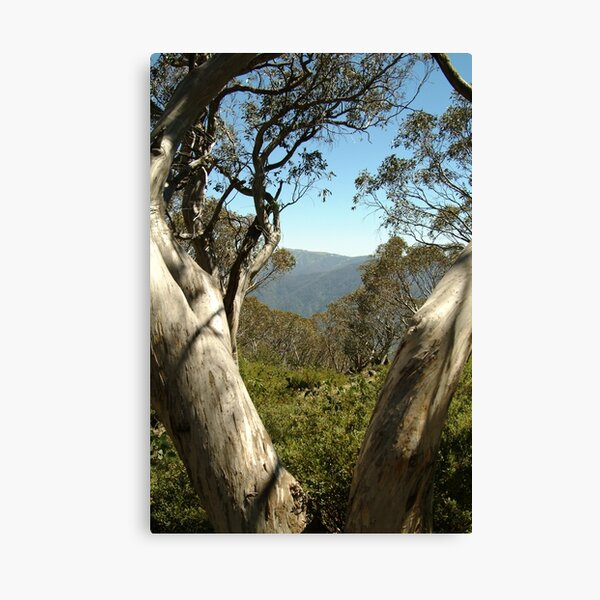 Joe Mortelliti Gallery - Mt Buller view from Bluff Hut on Mt Stirling, alpine Victoria, Australia. Canvas Print