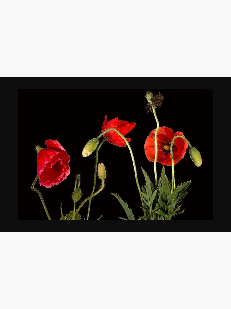 Vibrant Red Poppies On Black by ThatsMyStyle