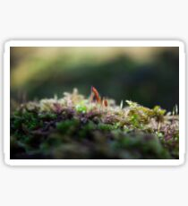 Fairy Moss Sticker