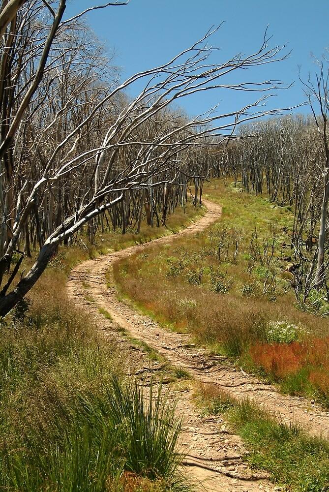 Joe Mortelliti Gallery - Winding track, Blue Rag Range, alpine Victoria, Australia. by thisisaustralia