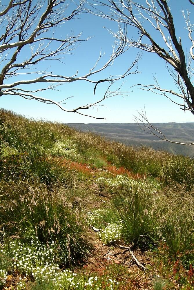 Joe Mortelliti Gallery - Nature's colours, Blue Rag Range, alpine Victoria, Australia. by thisisaustralia