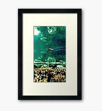 Little Fish in a Big Blue World Framed Print