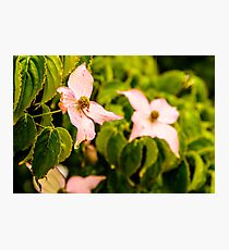 Flower Crying Photographic Print