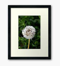 Furry  Pinwheel  Framed Print