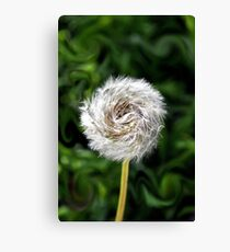 Furry  Pinwheel  Canvas Print
