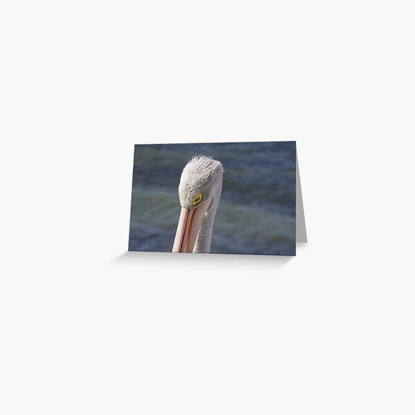 Pelican Sleeping Greeting Card