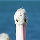 Pelican Eye Wear by Stephen Mitchell