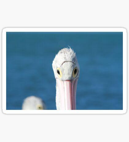 Pelican Eye Wear Sticker