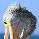 Pelican Eating by Stephen Mitchell