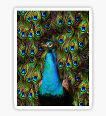 This peacock is watching you! Sticker