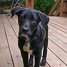 dorrigo dog by Bruce  Dickson
