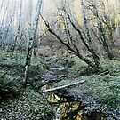 Tryon Creek by Bruce  Dickson