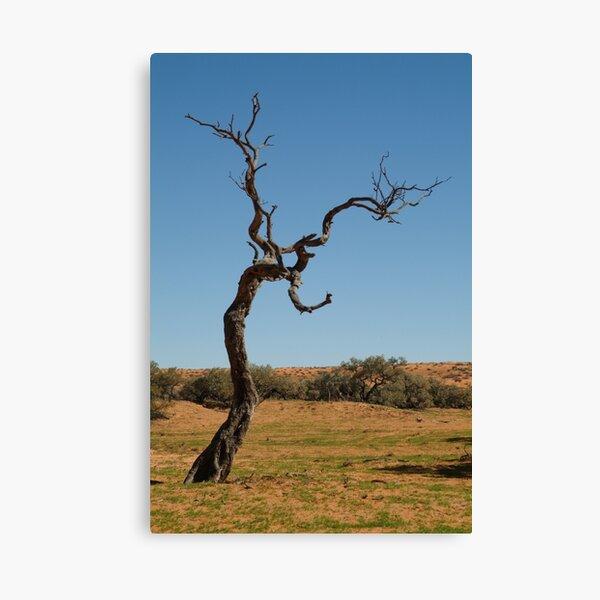 Joe Mortelliti Gallery - Gidgee Tree, Simpson Desert, Queensland, Australia. Canvas Print