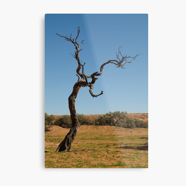Joe Mortelliti Gallery - Gidgee Tree, Simpson Desert, Queensland, Australia. Metal Print
