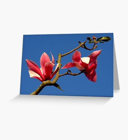 Blooming Magnolia Tree Greeting Card