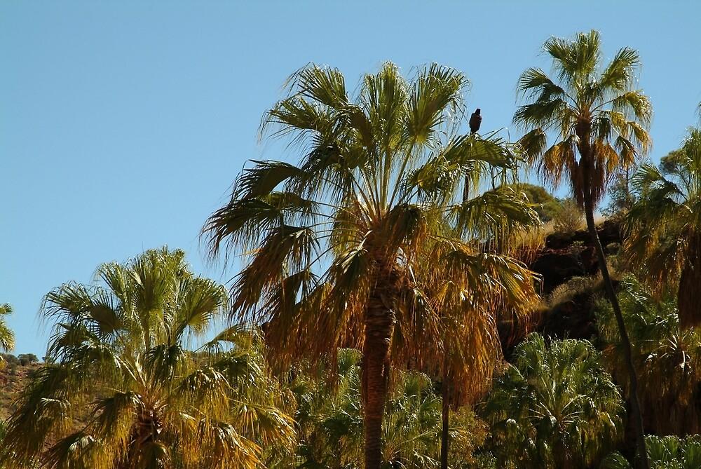 Joe Mortelliti Gallery - Palms, Palm Valley, MacDonnell Ranges, Northern Territory, Australia. by thisisaustralia
