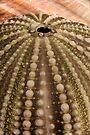 Sea Urchin Shell by WorldDesign