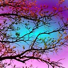 Spring Branches - Softly Illuminated by kenspics