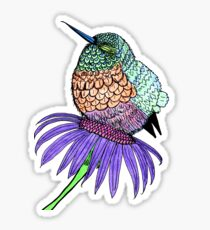 Fluffy Baby Hummingbird Sticker