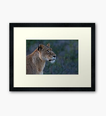 Early Morning Search Framed Print