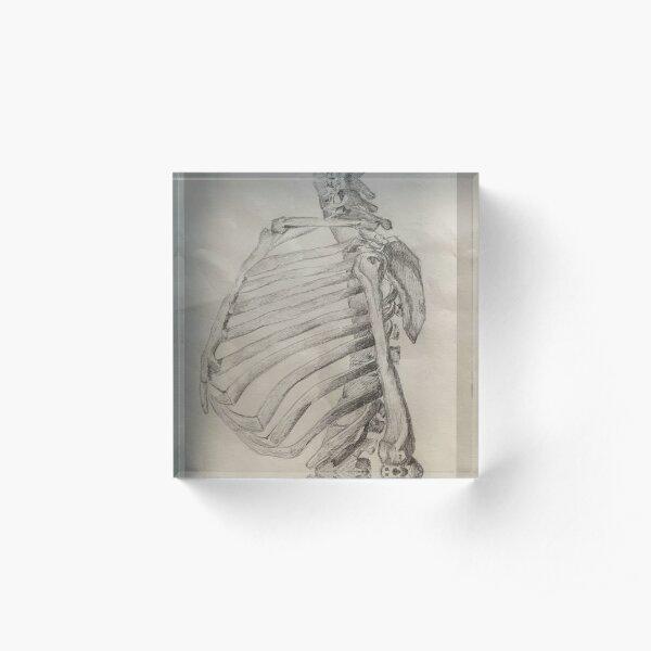 Skeleton Torso: Lateral view Acrylic Block
