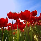 ...spring.. time to work with your wide angle lens...  by John44