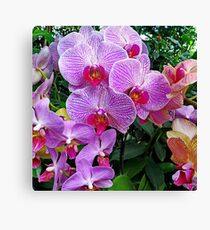 Pink Orchid #2 Canvas Print