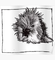 Graphic Porcupine Poster