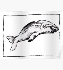 Graphic Sperm Whale Poster
