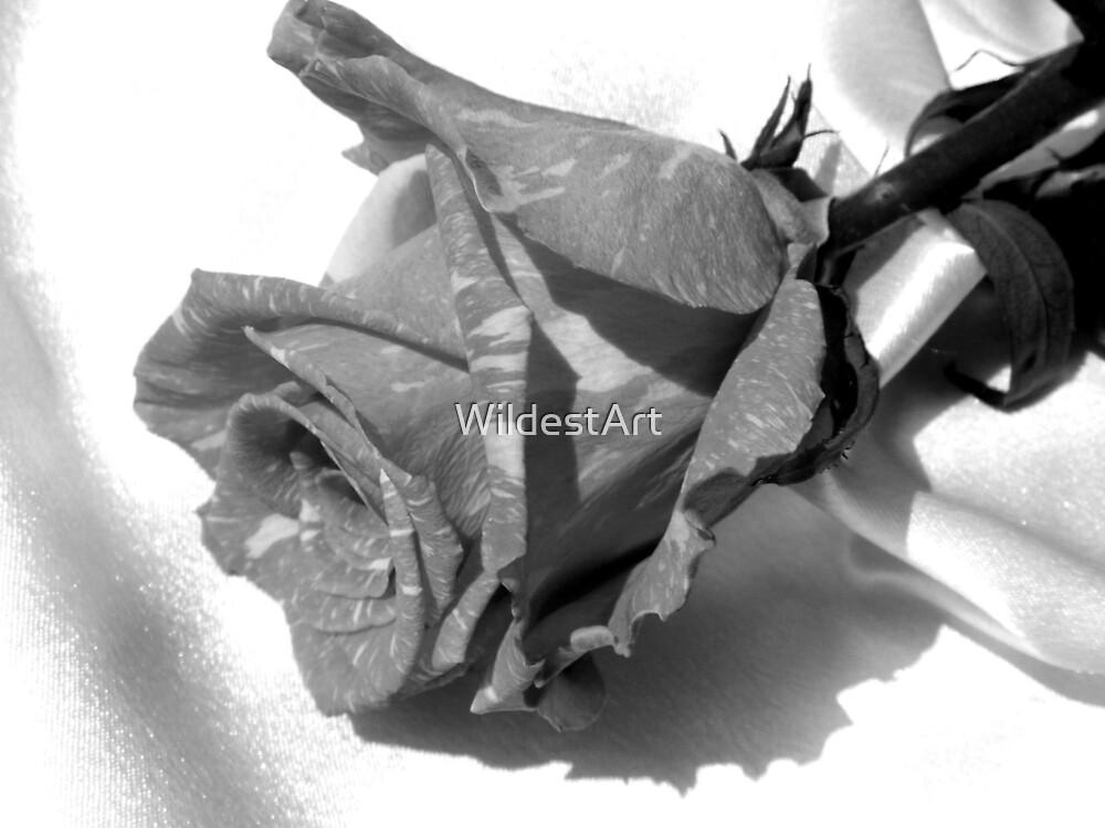 Black & White Rose by WildestArt