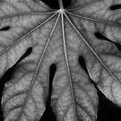 Various Veins by pix-elation