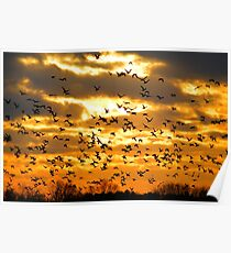 Ducks Unlimited Poster