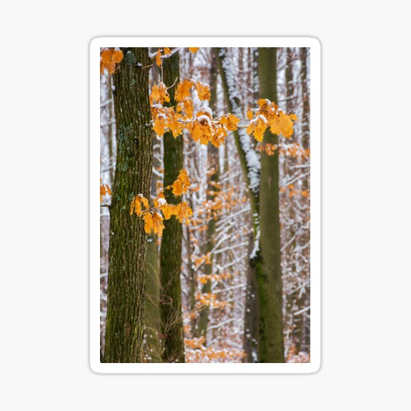 winter forest with some fall foliage in snow Sticker