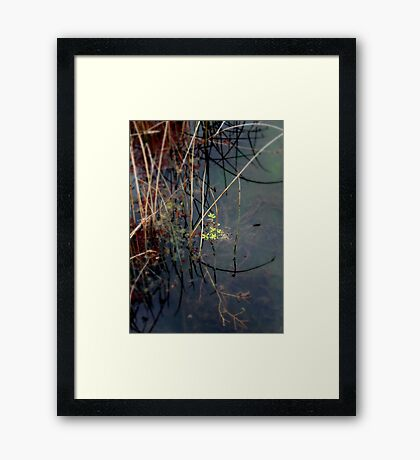Salisbury Waters Framed Print