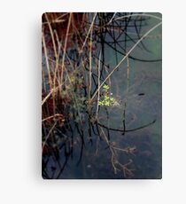 Salisbury Waters Canvas Print