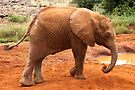 Baby Elephant After a Dust Bath by Carole-Anne