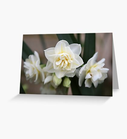 Triple Bloom Greeting Card