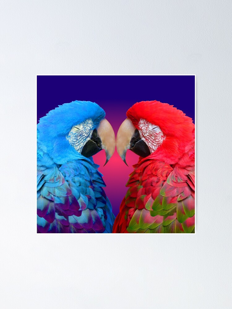 """Poster 24/"""" x 36/"""" Red and Blue Macaws"""