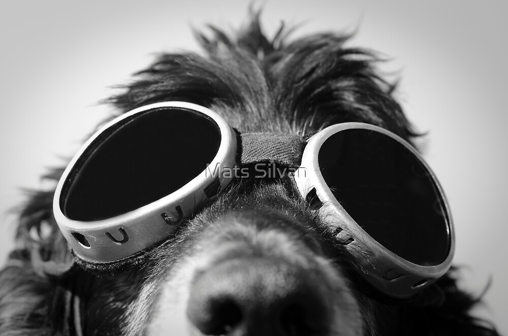 Dog with sunglasses by Mats Silvan