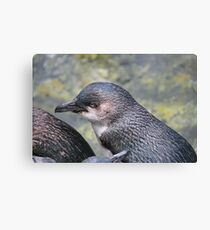 Little Blue Penguin Canvas Print
